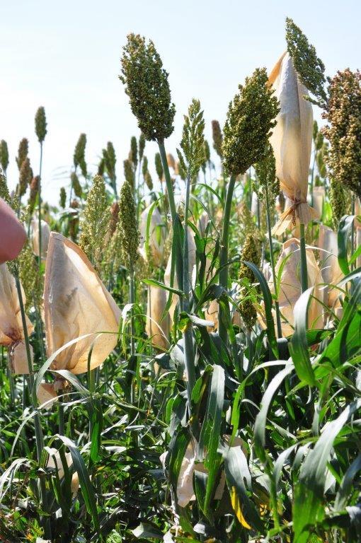 Projet Vavilov : préserver la biodiversité cultivée