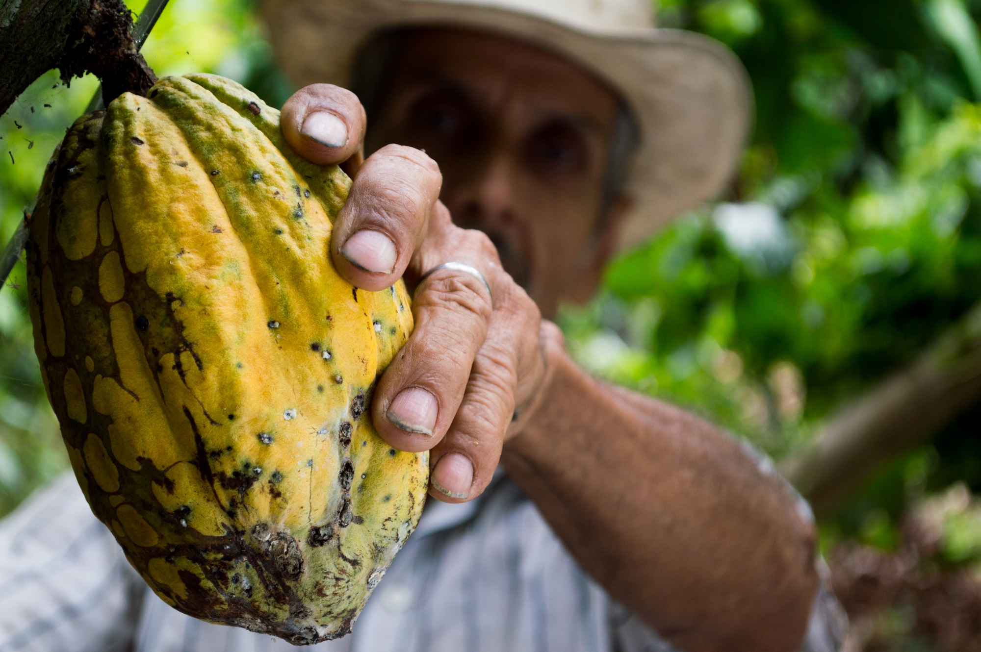 Terra Isara : imaginer l'agriculture et l'alimentation de demain
